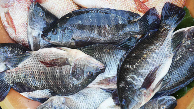 BAN ON TILAPIA AND ORNAMENTAL IMPORTS BY GOVERNMENT OF GHANA